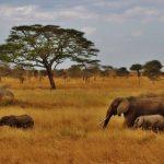 Obtenir son visa pour la Tanzanie pour des vacances de rêve