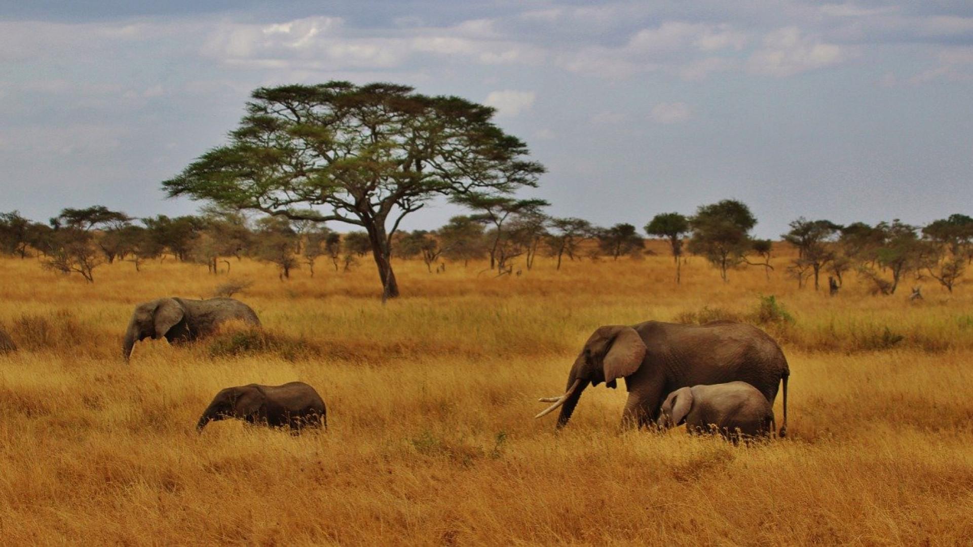 You are currently viewing Obtenir son visa pour la Tanzanie pour des vacances de rêve